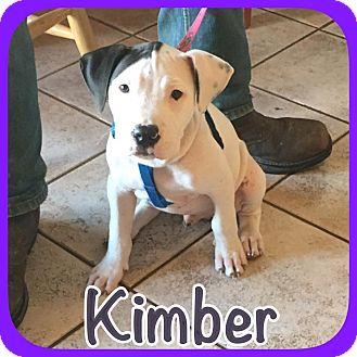 Bull Terrier Mix Dog for adoption in Ravenna, Texas - Kimber