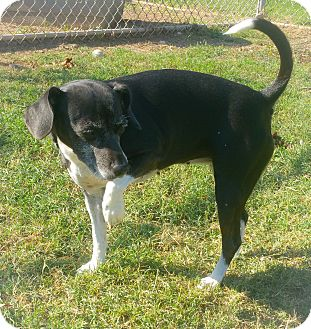 Parson Russell Terrier Mix Dog for adoption in Watauga, Texas - Zeal