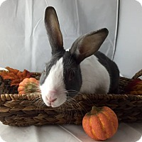Adopt A Pet :: Carrot - Grand Rapids, MI