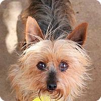 Adopt A Pet :: Lucy - Memphis, TN