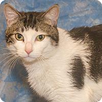 Adopt A Pet :: Bently - Elmwood Park, NJ
