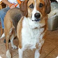 Adopt A Pet :: Riley - Yucaipa, CA