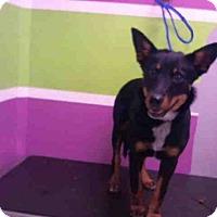 Adopt A Pet :: BRI - Houston, TX
