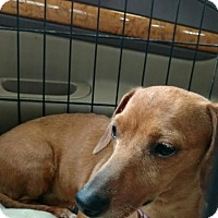 Adopt A Pet :: Tessa - Sherman, CT