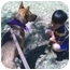 Photo 3 - Shepherd (Unknown Type)/Pharaoh Hound Mix Dog for adoption in Riverside, California - Oso