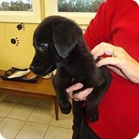 Adopt A Pet :: Misty - Crawfordville, FL