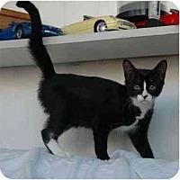 Adopt A Pet :: Sassy - Oakland Park, FL