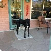 Adopt A Pet :: Maggie in Tucson - Phoenix, AZ