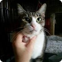 Adopt A Pet :: Stacey - Oakland Park, FL