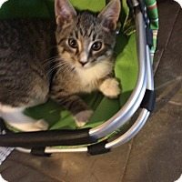 Adopt A Pet :: Twix - St. Louis, MO