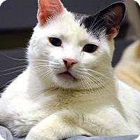 Adopt A Pet :: Zeus II - Canoga Park, CA