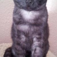Adopt A Pet :: Susy - Rosamond, CA