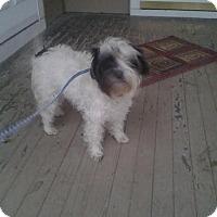 Adopt A Pet :: BANDIT - Upper Sandusky, OH