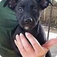 Adopt A Pet :: Arctic Fox - Gainesville, FL