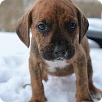 Adopt A Pet :: Mary - Danbury, CT