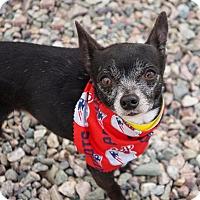 Adopt A Pet :: Pepper - Holliston, MA