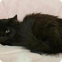 Adopt A Pet :: Maysen - at Petco - Germantown, MD