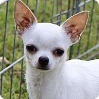 Adopt A Pet :: COURTESY POST - Jasper - Picayune, MS