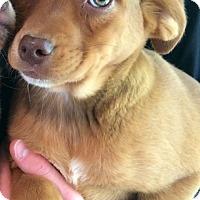 Adopt A Pet :: Leanne - SOUTHINGTON, CT