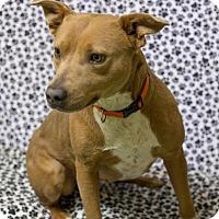 Adopt A Pet :: Emma - South Haven, MI