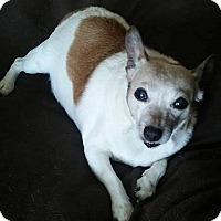 Adopt A Pet :: EVA - Elyria, OH