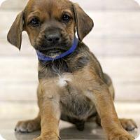 Adopt A Pet :: Kingara - Waldorf, MD