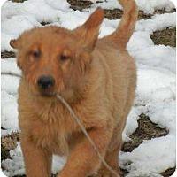 Adopt A Pet :: Lewis/Clark ADOPTIONS PENDING! - Antioch, IL