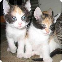 Adopt A Pet :: Jackies Female - Cincinnati, OH