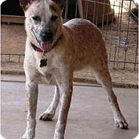 Adopt A Pet :: Bonita - Phoenix, AZ