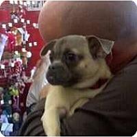 Adopt A Pet :: Nan - Oceanside, CA