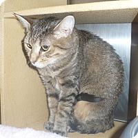 Adopt A Pet :: Camille - Colmar, PA