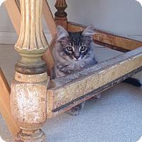 Adopt A Pet :: Saskia/Katya - Los Angeles, CA