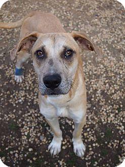 Retriever (Unknown Type) Mix Dog for adoption in Philadelphia, Pennsylvania - Slim Pick