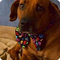 Adopt A Pet :: Duke - Okeechobee, FL