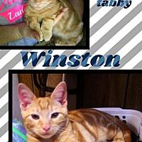 Adopt A Pet :: Winston - Bogalusa, LA