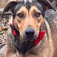 Adopt A Pet :: Duchess~LoverGirl! - Memphis, TN