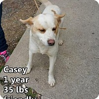 Adopt A Pet :: Casey - Woodstock, IL