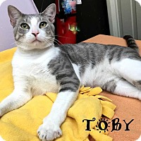 Adopt A Pet :: TOBY - Mooresville, NC