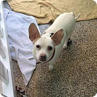Adopt A Pet :: Miss Piggy - Thousand Oaks, CA