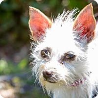Adopt A Pet :: Kansie - San Diego, CA