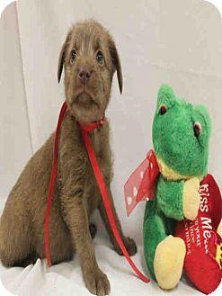 Labrador Retriever Mix Dog for adoption in Lufkin, Texas - Necie