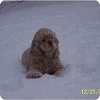 Adopt A Pet :: Rocky - Tacoma, WA