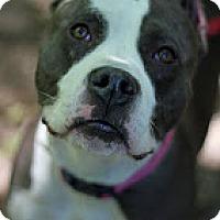 Adopt A Pet :: Gem - Tinton Falls, NJ