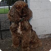 Adopt A Pet :: Bixby - Sugarland, TX