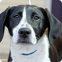 Adopt A Pet :: Holley - Knoxville, TN