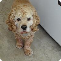 Adopt A Pet :: Sam 5yr Adopted - Mentor, OH