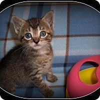 Adopt A Pet :: Reesee - South Plainfield, NJ