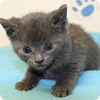 Adopt A Pet :: Tim McGraw of