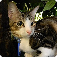Adopt A Pet :: Dr. Claw - The Colony, TX