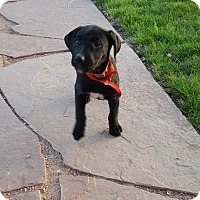 Adopt A Pet :: Crisp - Evergreen, CO